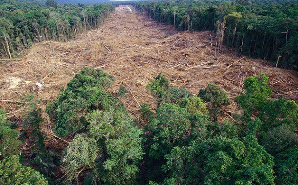De 2000 a 2018, Amazônia perdeu área de florestas superior a seis estados do RJ