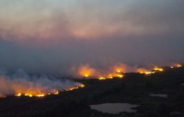 Pantanal em chamas é resultado da política suicida de Bolsonaro para o meio ambiente