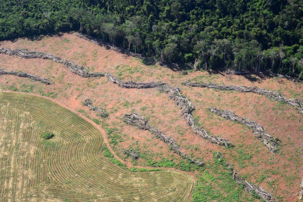 Estudo comprova que desmatamento já supera ritmo de recuperação da Floresta Amazônica