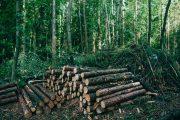 Amigo de madeireiros, governo Bolsonaro propõe menor orçamento para o Meio Ambiente em 2021