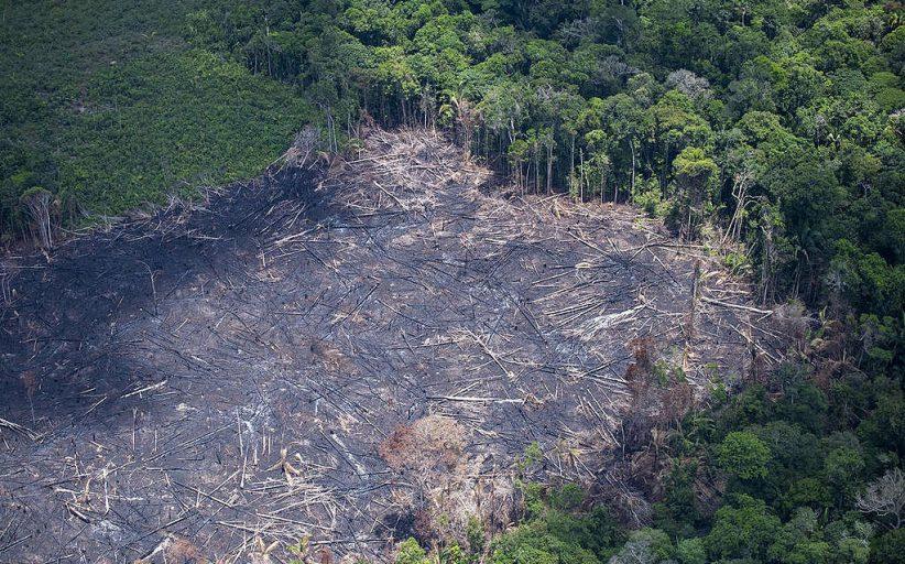 Desmatamento no Brasil aumentou 14% em 2020, e país perdeu 24 árvores por segundo